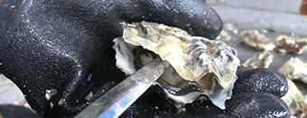 牡蠣(かき)なら赤穂市坂越『さこし』にある「鎌島水産」まで!産地直産の生牡蠣は豊かな自然が育てた自慢の牡蠣。『かましま水産』 牡蠣のむき方手順4
